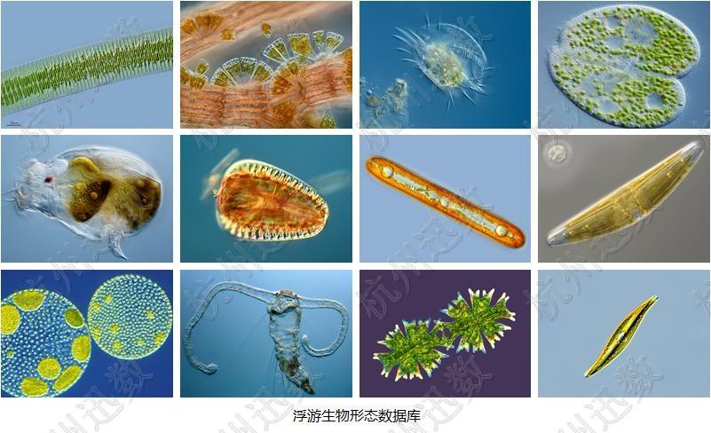 海洋生物手绘图